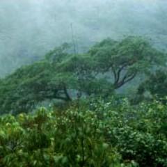 [2013] Mt. Calavite Wildlife Sanctuary Rapid Site Assessment Project