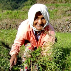 Humanizing Climate Change: Impacts on Global Food Security