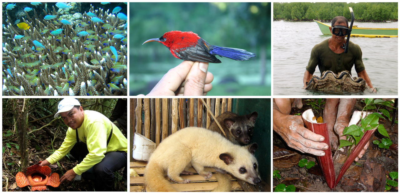 Biodiversity of the Philippines