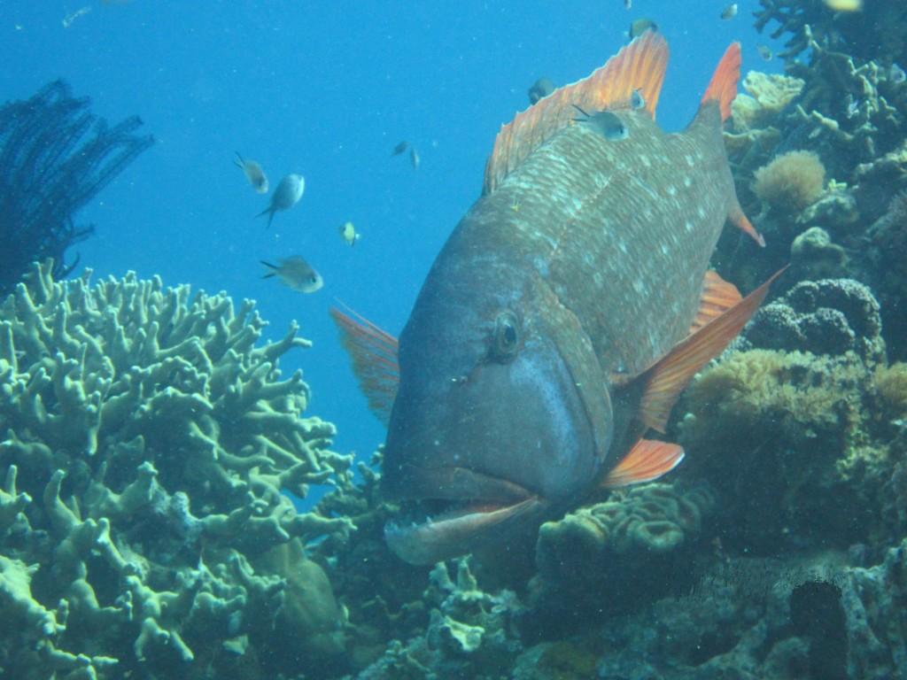 Marine Biology free paper online